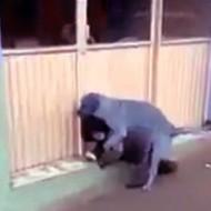 【レイプ動画】海外で撮影された小人症らしき女性が野良犬に犯されているにも関わらず誰も助けない獣姦映像