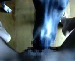 【無修正】犬にマンコをクンニさせる女性の一人称エロ動画